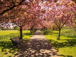 Anglický typ zahrady