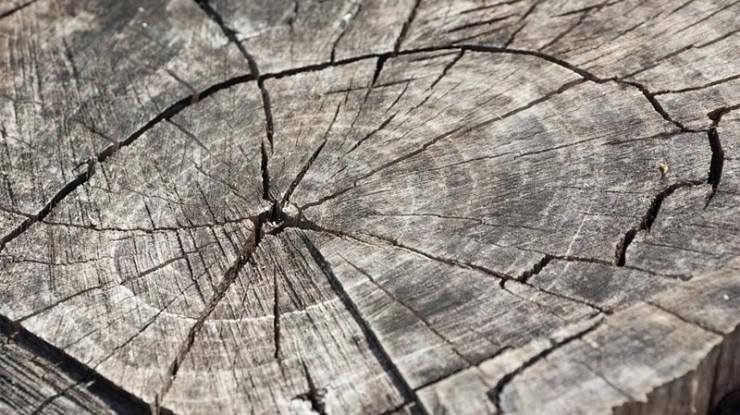 Jak zachovat dřevo krásné